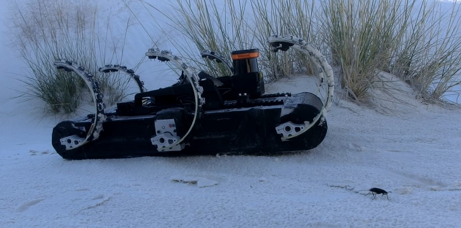 RHex robot and a darkling beetle at White Sands National Monument in southern New Mexico, 2014.