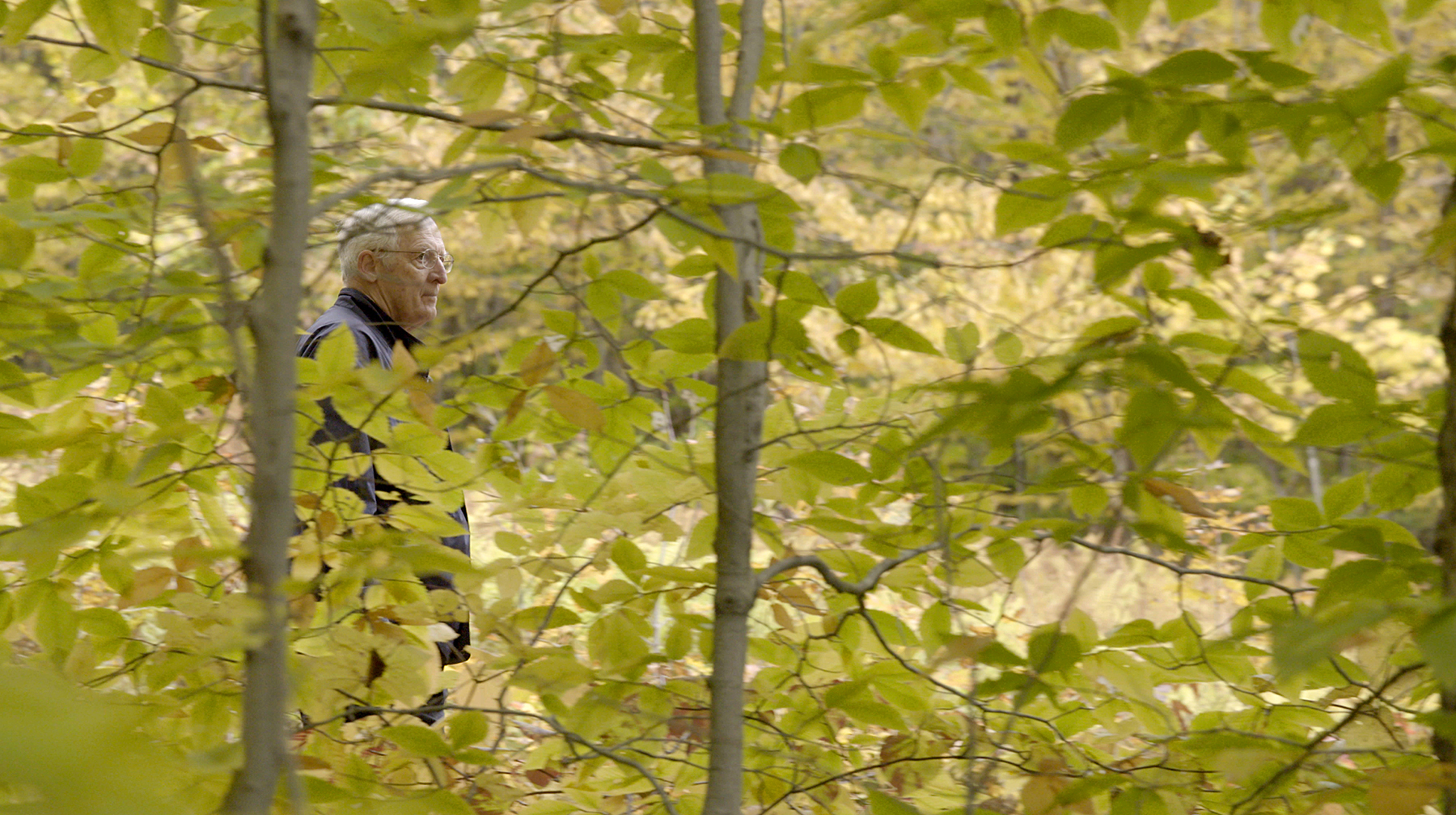 Man walking in forest of fall leaves