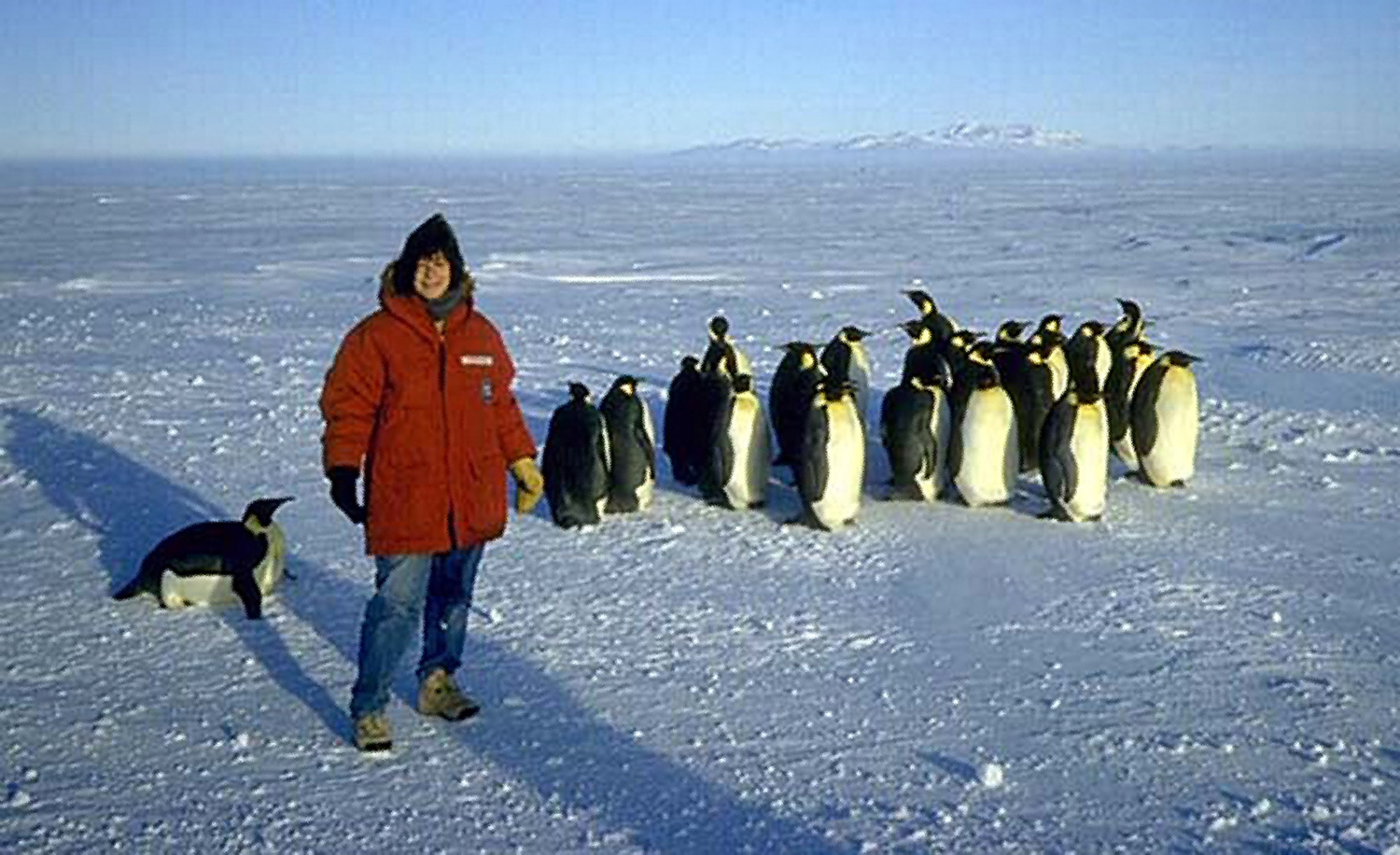 Woman and penguins in Antarctica