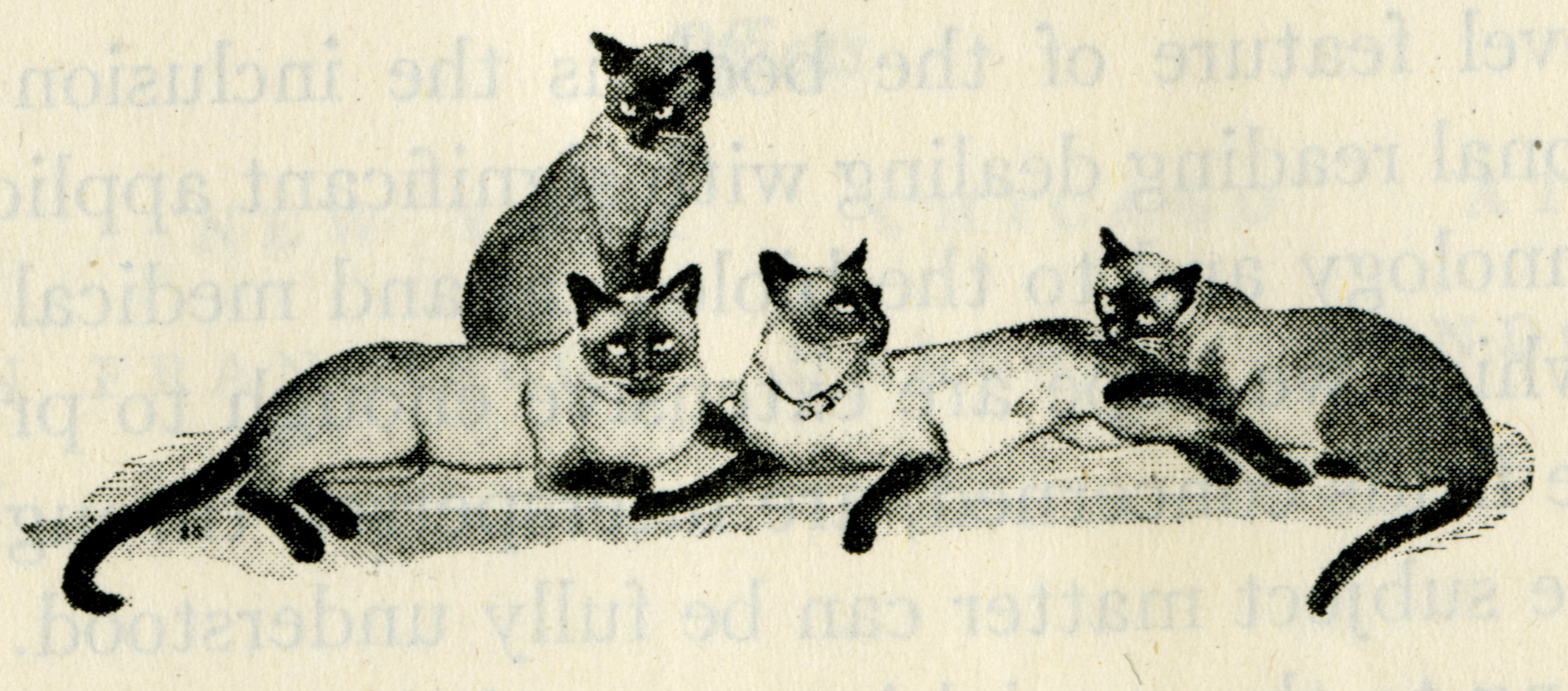 One of the many whimsical illustrations of the Fieser's cats that were included in their textbooks.