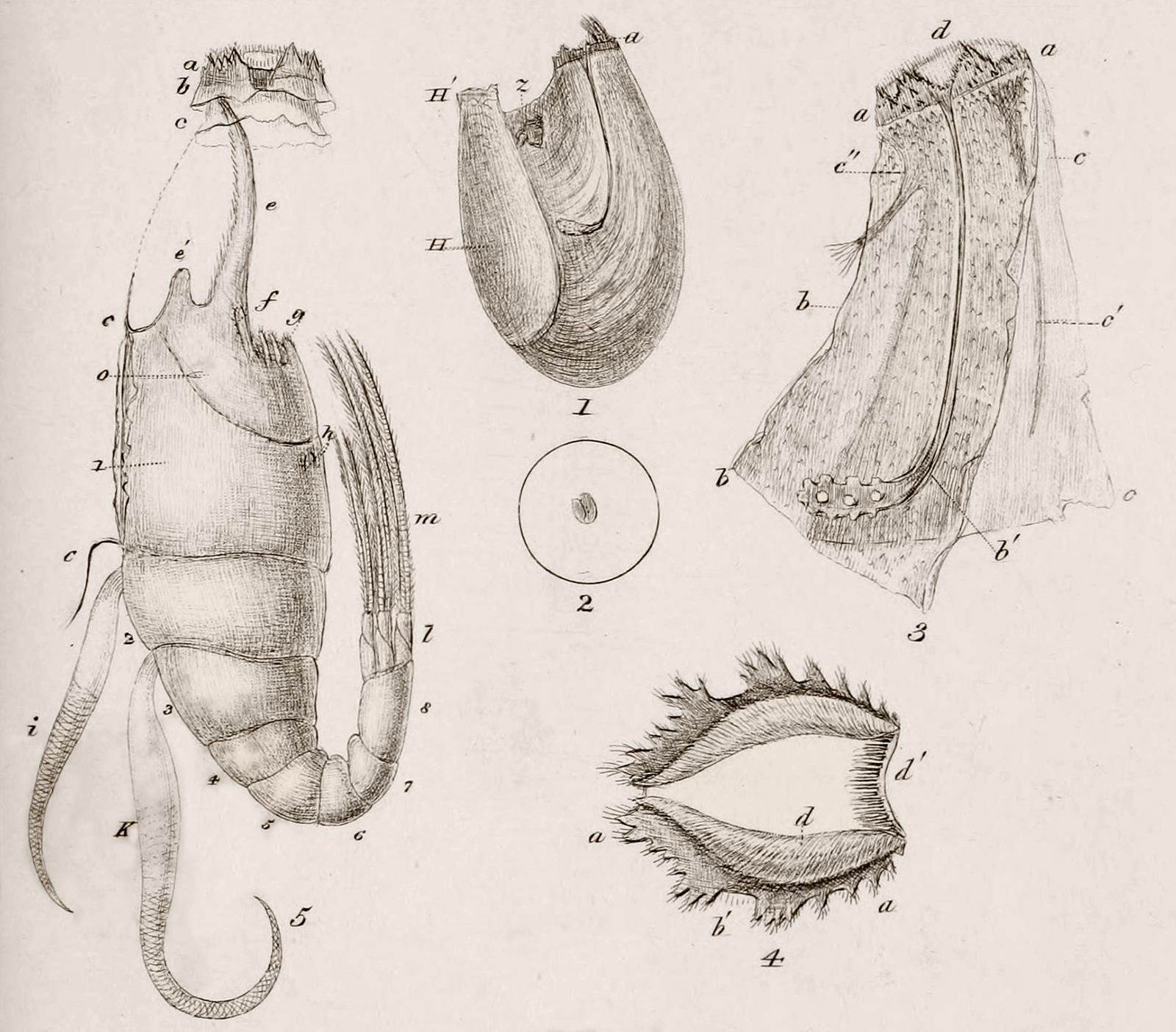 Antique anatomical line drawings