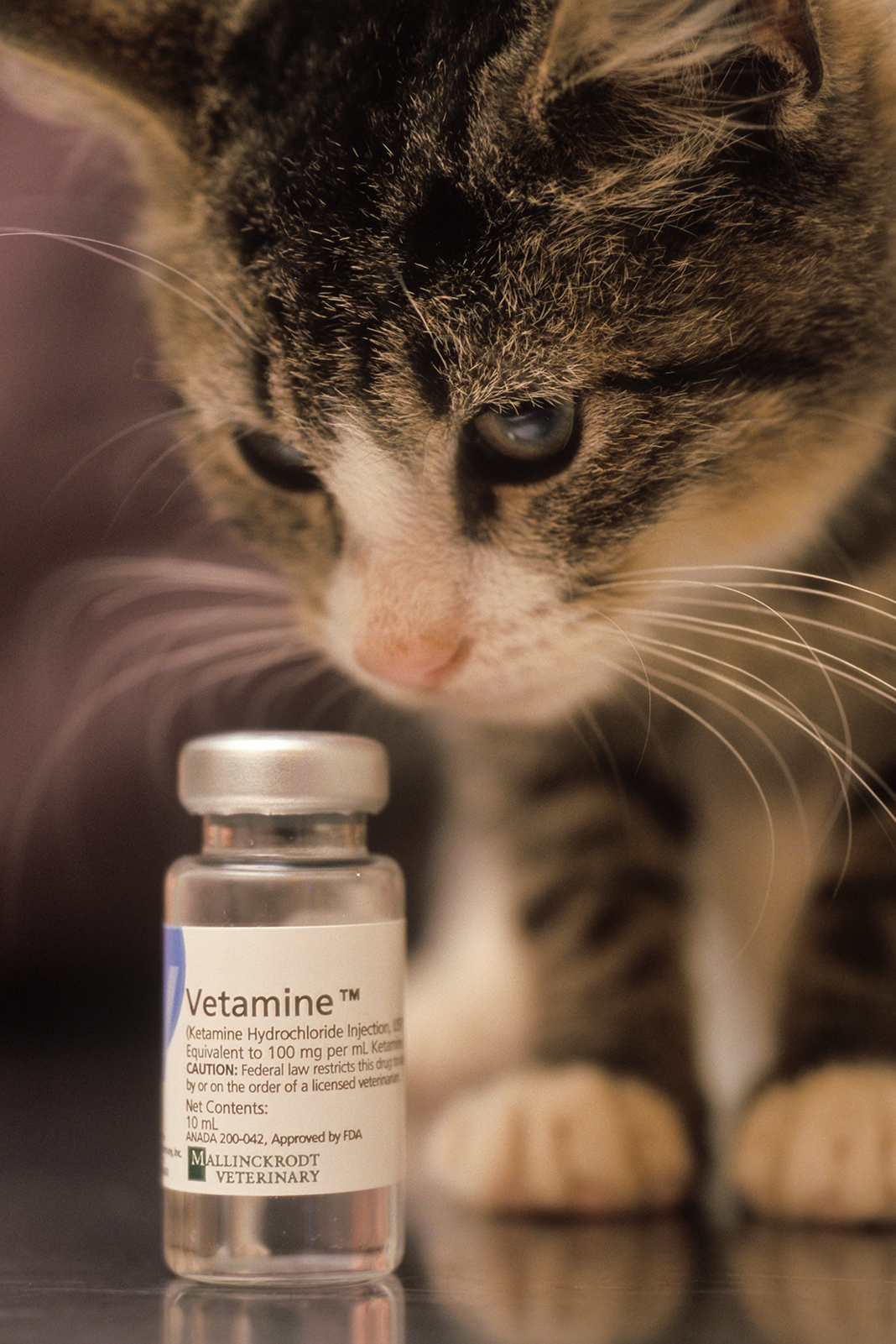 Cat with a vial of injectable drugs