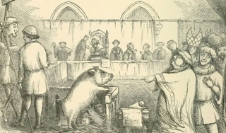 Cartoon of a pig in a courtroom