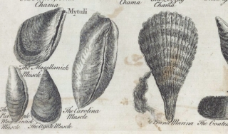 Book open to illustrations of shellfish