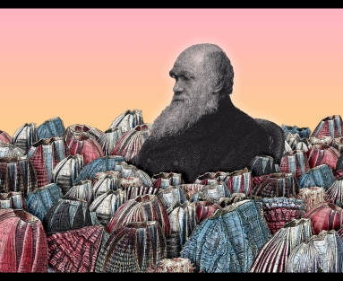 Collage of Charles Darwin and barnacles