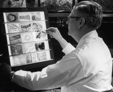A biologist at the Oak Ridge National Laboratory (ORNL) examines animal tissue, ca. 1970.