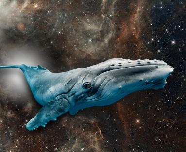 photo of whale with celestial background