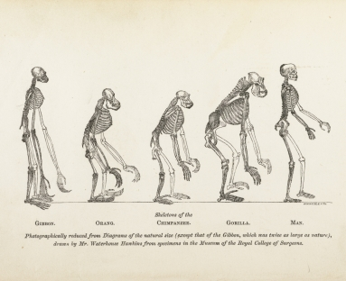 different theories of evolution
