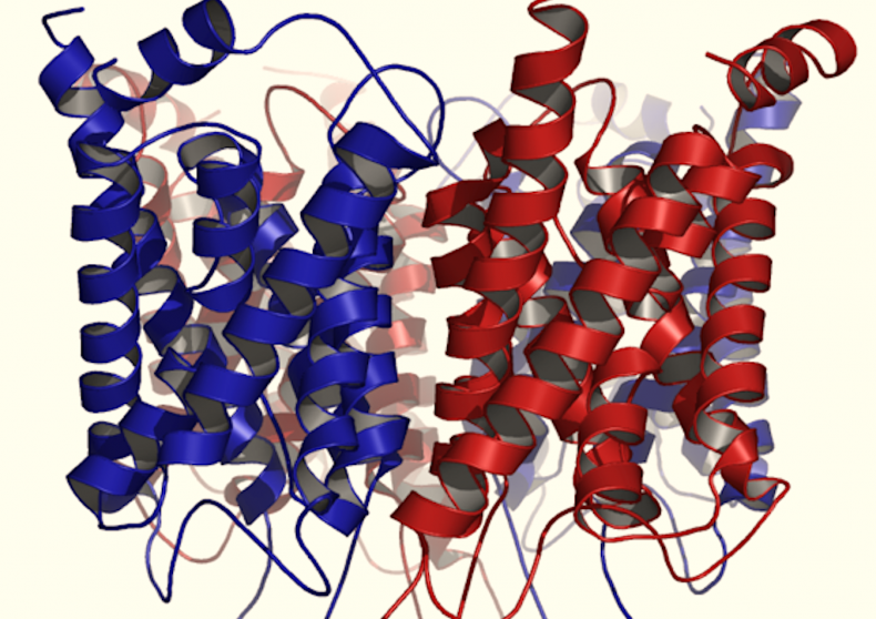 Aquaporin water channels