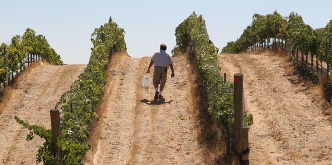 Collecting samples in a vineyard