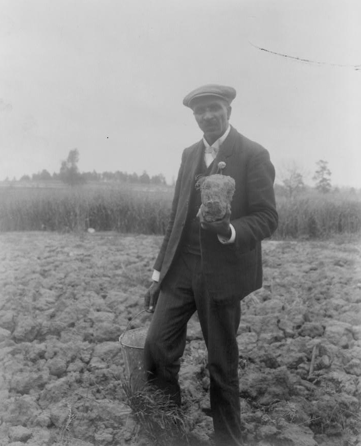 George Washington Carver standing in a field, probably at Tuskegee, holding a piece of soil, 1906.