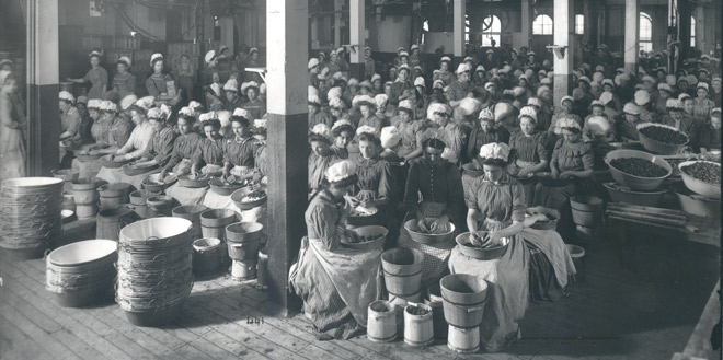 Heinz factory workers cleaning strawberries before canning, ca. 1904