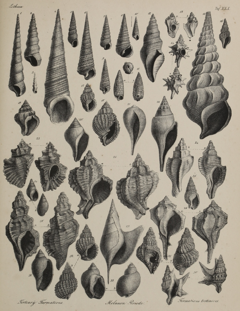 Fossils drawn by Heinrich Bronn