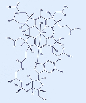 The molecular structure of vitamin B12, which Dorothy Hodgkin determined using X-ray crystallography.