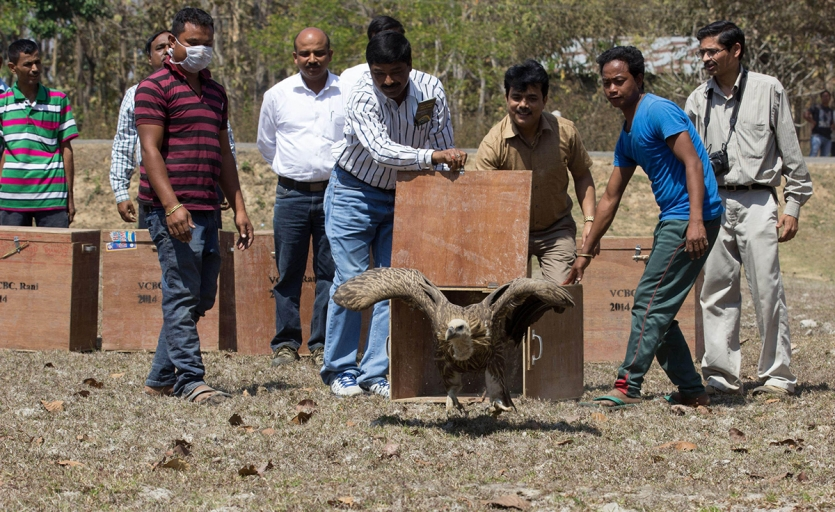 A group of men release a vulture from a crate