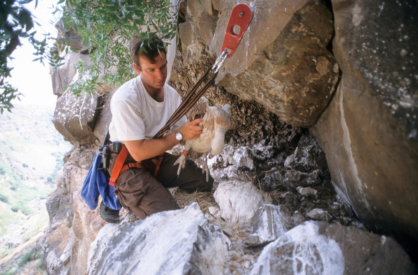 Man in climbing gear holds a young vulture