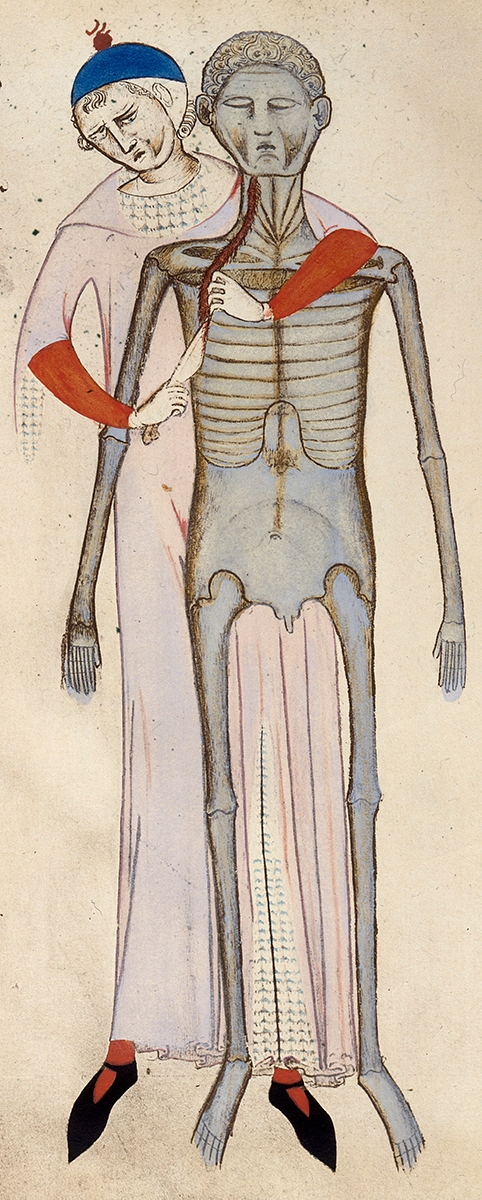 Old illustration of human dissection