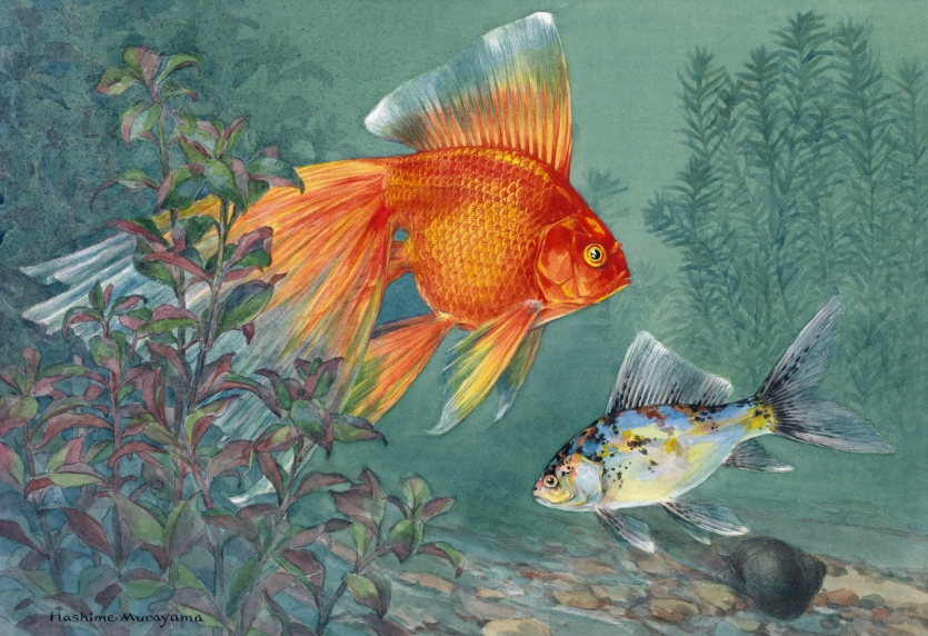 Color painting of goldfish