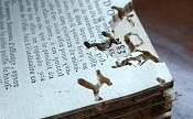 Decaying book