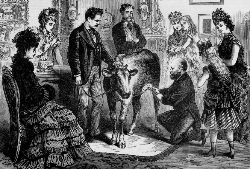 A well-dressed group of men and women in a parlor surrounding a calf